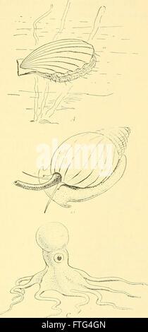 La biologie élémentaire; une introduction à la science de la vie (1924)