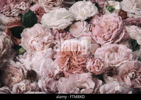 Image de fond roses vintage, nostalgique. Banque D'Images