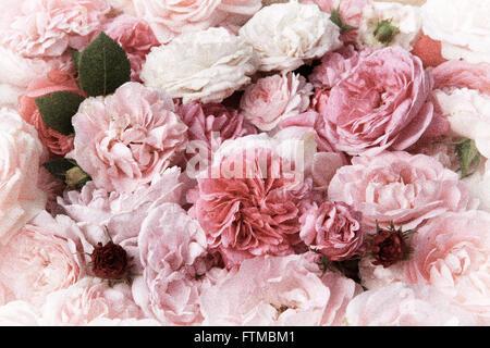 Image de texture de fond roses vintage rose. Banque D'Images