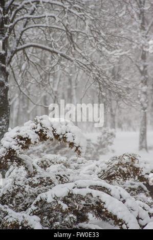 Branches de buissons et d'arbres dans un parc couvert de neige
