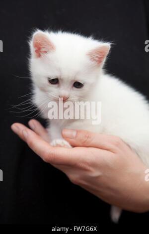 Chat, animal, domestique, tendre, doux, relaxant Banque D'Images