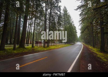 Forêt de l'Oregon avec une route rurale qui la traverse. Banque D'Images
