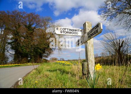 Printemps jonquilles par route à l'ancienne près de la facilité d'orientation cottingworth East Riding of Yorkshire Banque D'Images