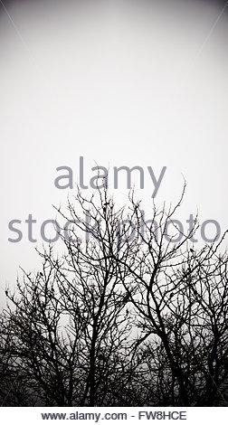 Les branches d'arbre Creepy contre un ciel sombre. Les branches sans feuilles, nu, et sans vie vers un ciel gris. Banque D'Images