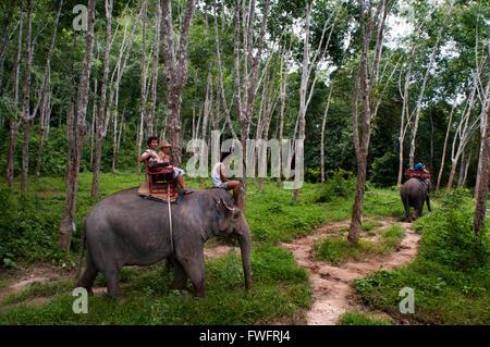 L'équitation d'éléphant dans la forêt d'hévéa. Krabi. La Thaïlande, en Asie. Nature Krabi Elephant Trekking & River Camp. L'Elephant Camp est