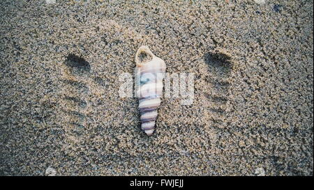 Portrait d'un coquillage sur le sable à la plage Banque D'Images