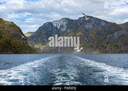 Vol de mouettes au-dessus des montagnes de la rivière contre Banque D'Images