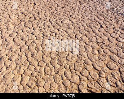Le sel séché, pan, Dead Vlei, Sossusvlei, Désert du Namib, Namibie, Namib-Naukluft National Park Banque D'Images