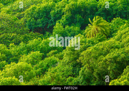 Rain forest, Virginia