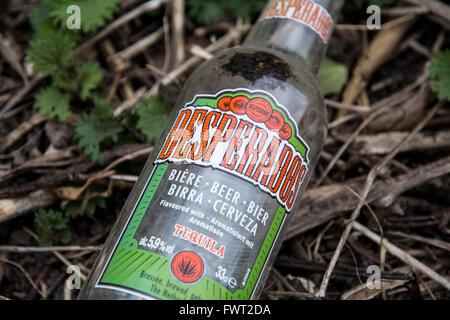 Une bouteille de bière Desperados vide jeté dans un buisson sur le bord de la route au Royaume-Uni. Banque D'Images