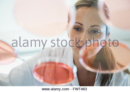 Female scientist analyzing solution chimique in petri dish Banque D'Images