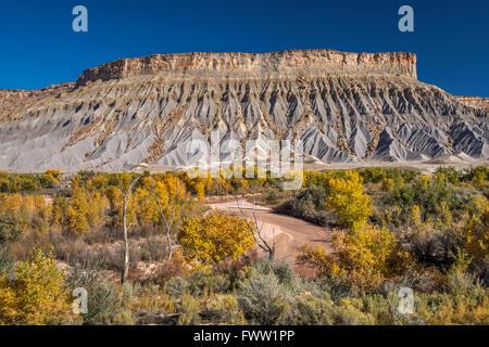 Au sud dans la région de Mesa Caineville Blue Hills, Fremonts peupliers dans couleurs d'automne sur la rivière Fremont, Banque D'Images
