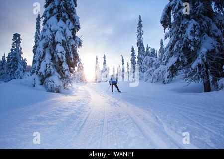 La Suède, Dalécarlie, Salen, Mature man ski de fond au crépuscule Banque D'Images