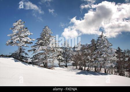 Station de ski en hiver et le Japon merveilleux crée des scènes naturelles lorsque les arbres sont chargés de neige