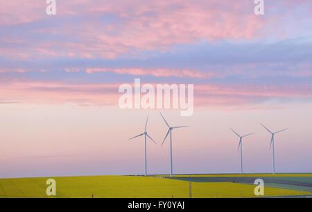 Champ éolien et les éoliennes au coucher du soleil Banque D'Images