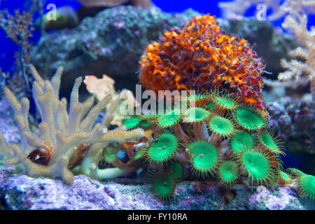 Coral Reef Banque D'Images
