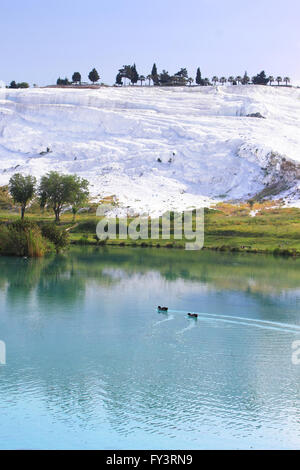Canards sur le lac, terrasses de calcaire calcifié sur arrière-plan, Pamukkale, Turquie Banque D'Images
