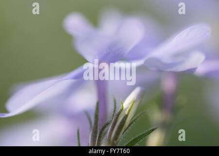 Fleurs pourpre artistique abstrait Banque D'Images
