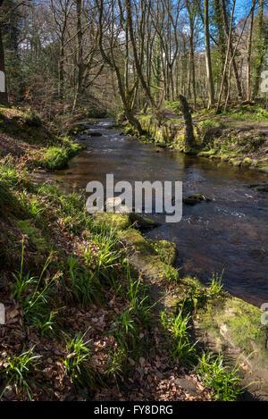 Un beau jour de printemps dans la vallée de Rivelin près de Sheffield. Banque D'Images