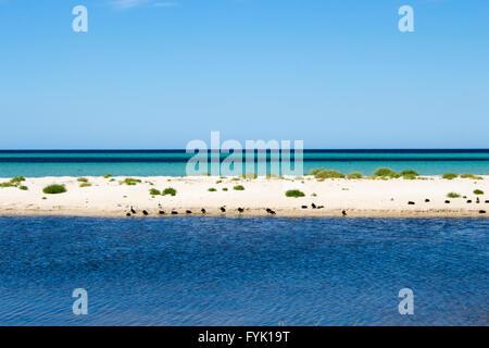 Le calme océan Indien à Dunsborough , Geographe Bay au sud ouest de l'Australie sur une belle fin d'après-midi au Banque D'Images