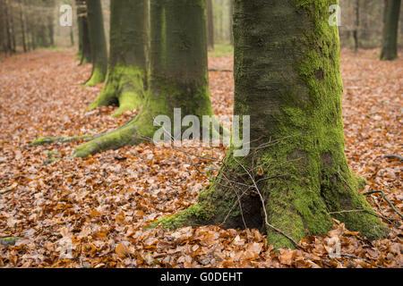 Couvert de mousse, vert, pieds d'arbres Banque D'Images