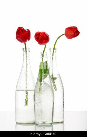 Aroma, fleur, frais, ouvert, réflexion, stil life, printemps, tulipes, composition, beau, beauté, Fleur, fleurs, Banque D'Images