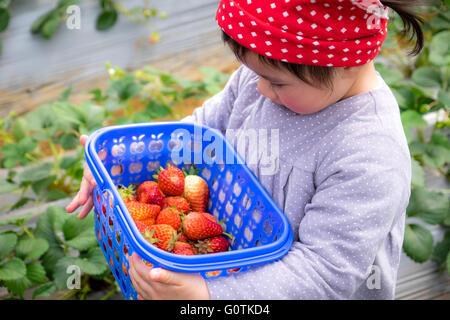 Girl holding panier de fraises, Yunnan, Chine Banque D'Images