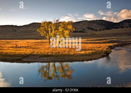 WY01653-00...WYOMING - Nuages et un tremble reflétant à Slough Creek dans le Parc National de Yellowstone.