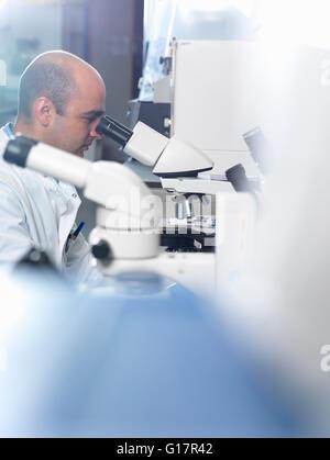 Visualisation scientifique sous la lumière parasites microscope in laboratory, Jenner Institute, Université d'Oxford Banque D'Images