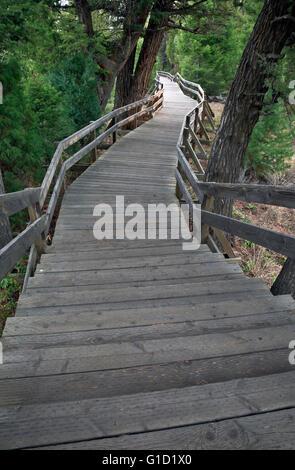 WY01699-00...WYOMING - Boardwalk à Canary Spring sur la terrasse supérieure à Mammoth Hot Springs dans le Parc National Banque D'Images