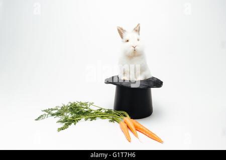 Lapin dans un chapeau et carotte isolé sur fond blanc Banque D'Images