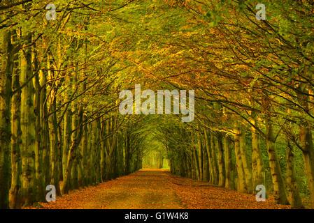 Tunnel d'arbres d'arbres le long d'un chemin dans une forêt avec modification de la couleur du feuillage au changement Banque D'Images