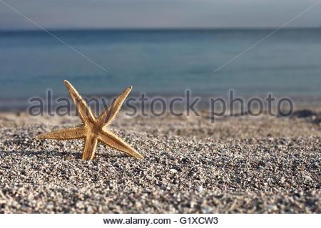 étoile De Mer Sur La Plage Au Bord De Leau Dans Les
