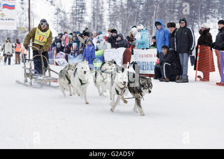 L'exécution de l'équipe de chien de traîneau musher Kamchatka Chuprin Alexander. Course de traîneaux à chiens extrême Banque D'Images