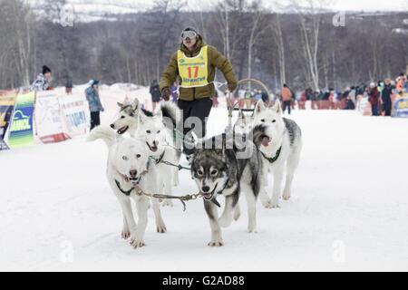 L'exécution de l'équipe de chien de traîneau Alexander Chuprin musher du Kamtchatka. Course de traîneaux à chiens Banque D'Images