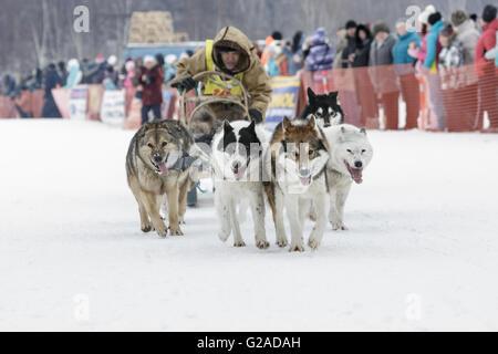 L'exécution de l'équipe de chien de traîneau Valery Chuprin musher du Kamtchatka. Course de chiens de traîneau traditionnel Banque D'Images