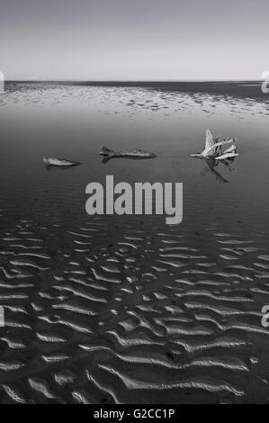Un grand morceau de bois flotté se situe dans un bassin peu profond d'eau en noir et blanc. Banque D'Images