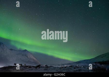 L'observation des aurores boréales dans l'île de Kvaloya, Tromso, Norvège. Nous avons eu un incroyable avec le ciel Banque D'Images