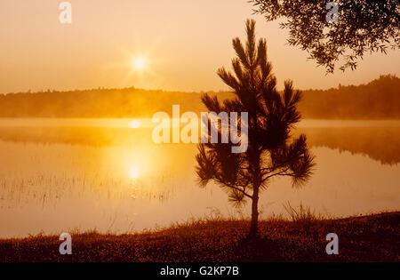 Pin rouge (Pinus resinosus) au lever du soleil sur Tilton Lake Sudbury Ontario Canada Banque D'Images