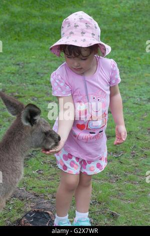 Jeune fille de l'Ouest alimentation kangourou gris à Lone Pine Koala Sanctuary, Fig Tree Pocket, Brisbane, Queensland, Banque D'Images