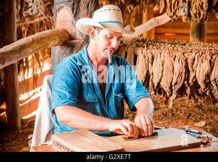 Utilisation éditoriale [seulement] Vallée de Viñales, Cuba - producteur de tabac fumer un cigare alors qu'il obtient l'une des feuilles de tabac.