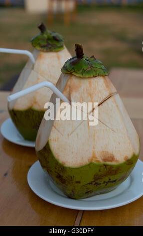 Les jeunes cocotiers fournissent une boisson hydratante refereshing dans les endroits où ils sont récoltés lorsqu'ils Banque D'Images