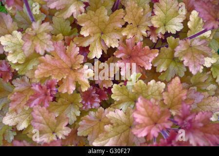 Jardin plante avec des feuilles de couleurs différentes Banque D'Images