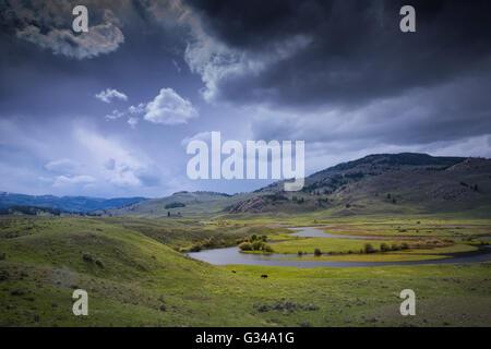 USA, Rockie Mountains, Wyoming, Yellowstone, Parc National, l'UNESCO, Patrimoine Mondial, Lamar Valley, Bison bison, bison,