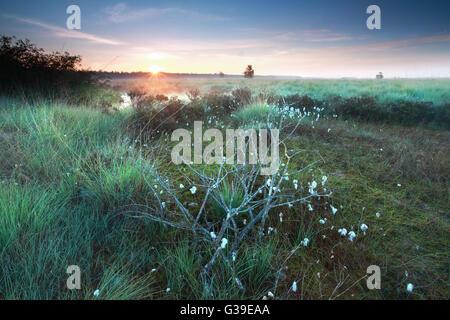 Lever de soleil sur misty swamp en été, Pays-Bas Banque D'Images