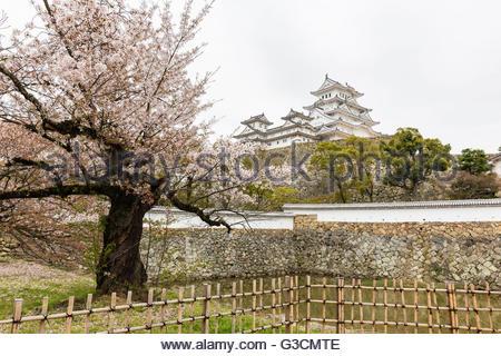 Cerisier en fleurs en face de l'Himeji Castle, UNESCO World Heritage - site naturel, Himeji, la région de Kinki, Banque D'Images