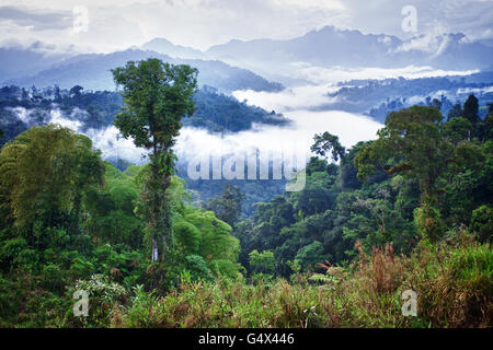 Forêt amazonienne. L'Équateur Banque D'Images