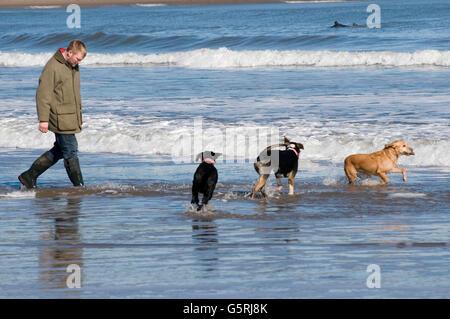 Homme marchant sur les chiens chien plage plages à pied mer surf exécuter exécution passerelles au Royaume-Uni Banque D'Images