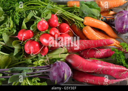 La carotte, radis, radis rouge, navet, chou navet Allemand / (Daucus carota), (Raphanus sativus var. sativus), (Brassica Banque D'Images
