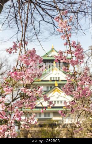 Les fleurs de cerisier dans le château d'Osaka au Japon Banque D'Images